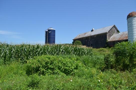 Corn fields of Warwick