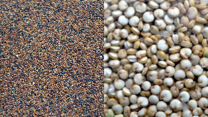 Red Quinoa (left), Organic White Qunoa (right)