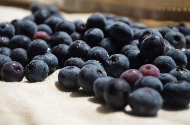 blueberries (1 of 1)