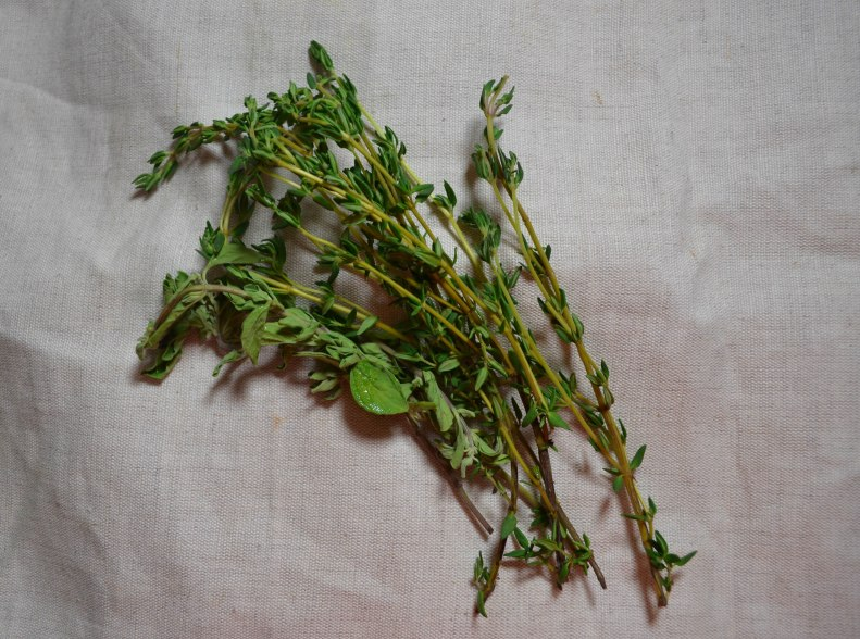 thyme (1 of 1)